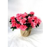 Azalea rosa decorada(DISPONIBLE SOLO PARA MADRID)