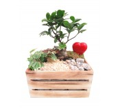 Composición con bonsai